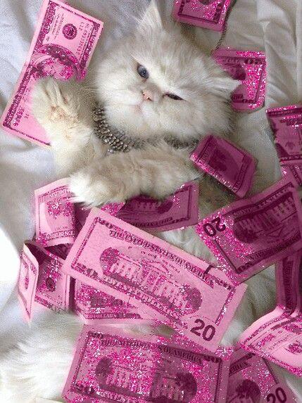 kitten-cash-hey-kudisco