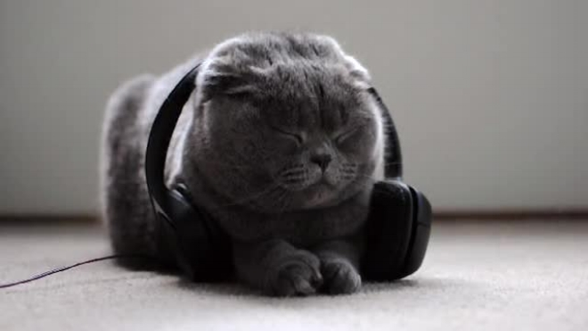 Bacon ( @baconcup ) gives Music for Cats a listen.