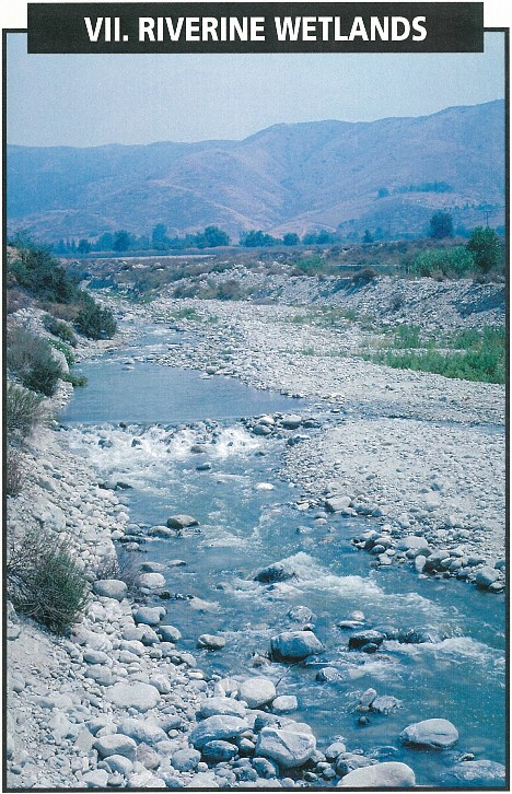 - IntroductionRiverine WetlandsTypes of Rivers, Streams, and WashesRiverine Wetlands Subsystems, Classes, and SubclassesRiverine Hydrogeomorphic UnitsEcosystem Functions and Socio-Economic ValuesEcosystem FunctionsSocio Economic ValuesImpacts and LossesModification of Natural Flow and Retention PatternsExternal ThreatsL Riverine Systems as Open EcosystemsRiverine Systems as Disturbance Driven EcosystemsLoss of Resistance and Resilience in Riverine EcosystemsRestoration and Creation of Riverine WetlandsRare or Threatened WetlandsKey to the Riverine Wetland Subsystems and ClassesTable of Riverine Geogeomorphic Units Arranged Within Corresponding Water RegimesCatalogue of Riverine Wetlands