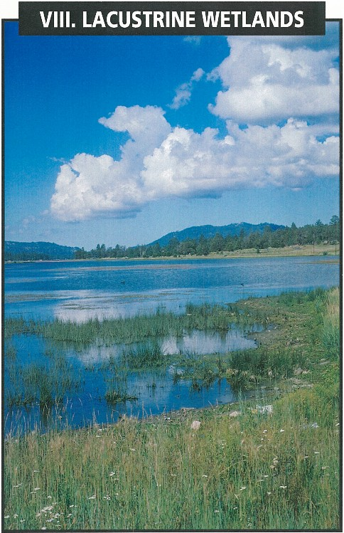 - IntroductionLacustrine WetlandsTypes of EstuariesNatural LakesArtificial ReservoirsLacustrine Wetland Classes and SubclassesLacustrine Hydrogeomorphic UnitsEcosystem Functions and Socio-Economic ValuesEcosystem FunctionsSocio Economic ValuesImpacts and LossesRestoration and Creation of Lacustrine WetlandsRare and Threatened Lacustrine WetlandsKey to the Lacustrine Wetland Subsystems and ClassesTable of Hydrogeomorphic Units in the Lacustrine System Arranged Within Corresponding Water RegimesCatalogue of Lacustrine Wetlands
