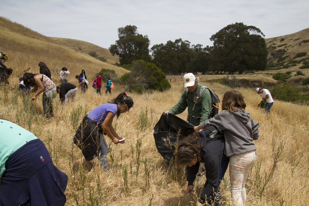 Kids remove invasive plants from Santa Cruz Island