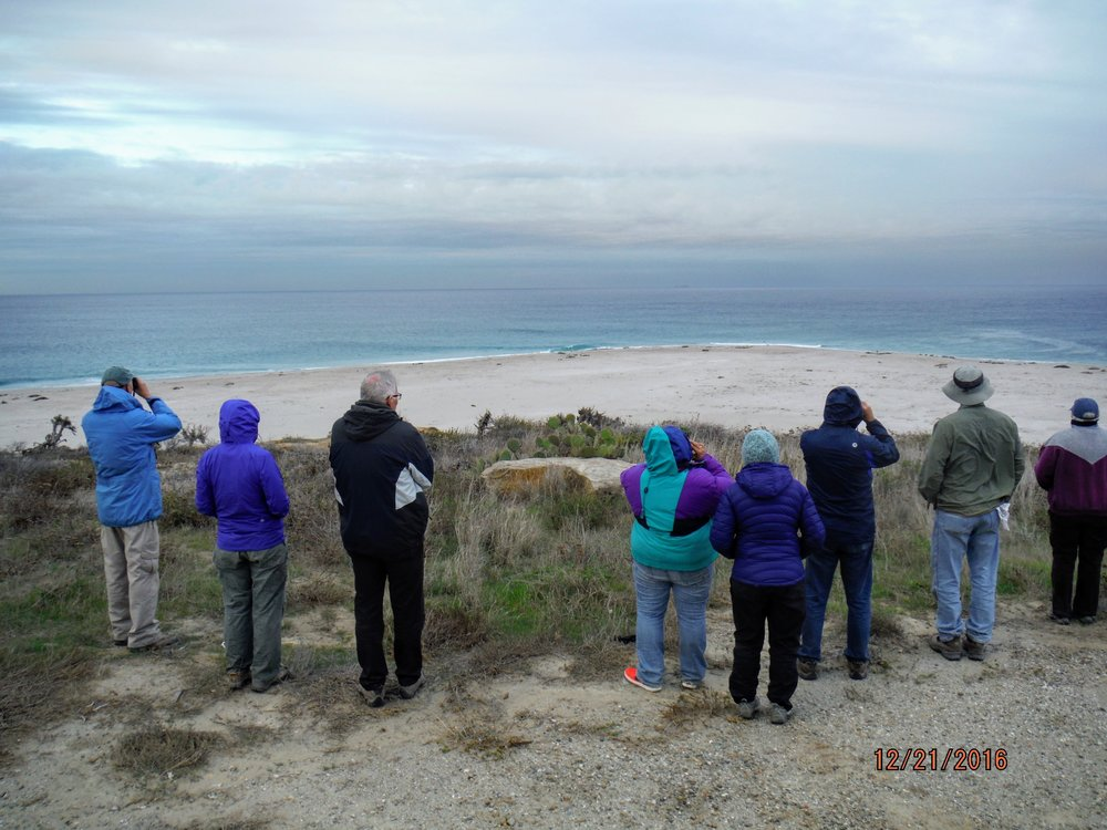 Volunteers on San Nicolas Island