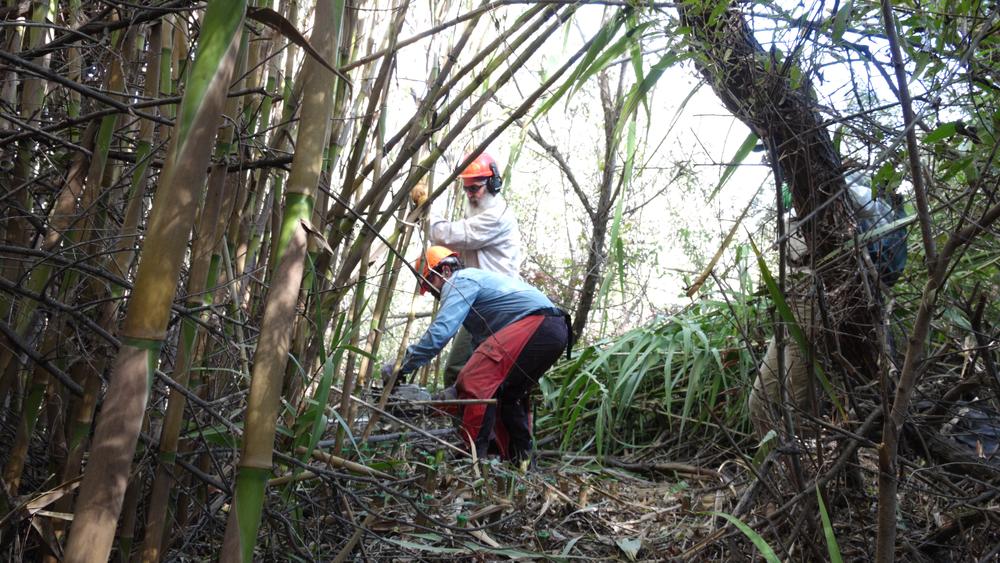 Field technicians work to cut down arundo.