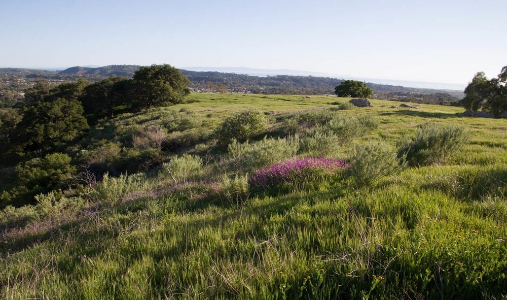 There are also a number of native shrub communities on the fringes of the grassland that provide yet more habitat for birds and other wildlife.