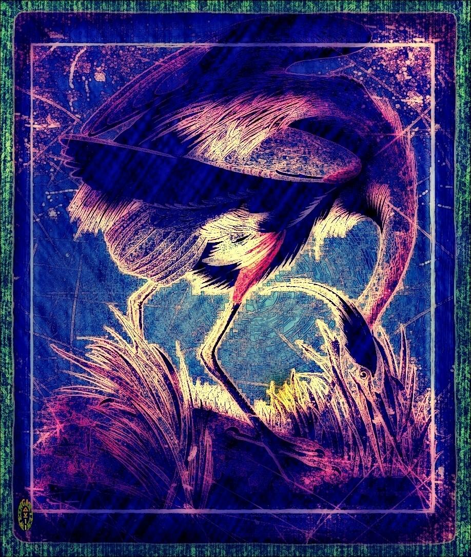 Audubon Variation 11