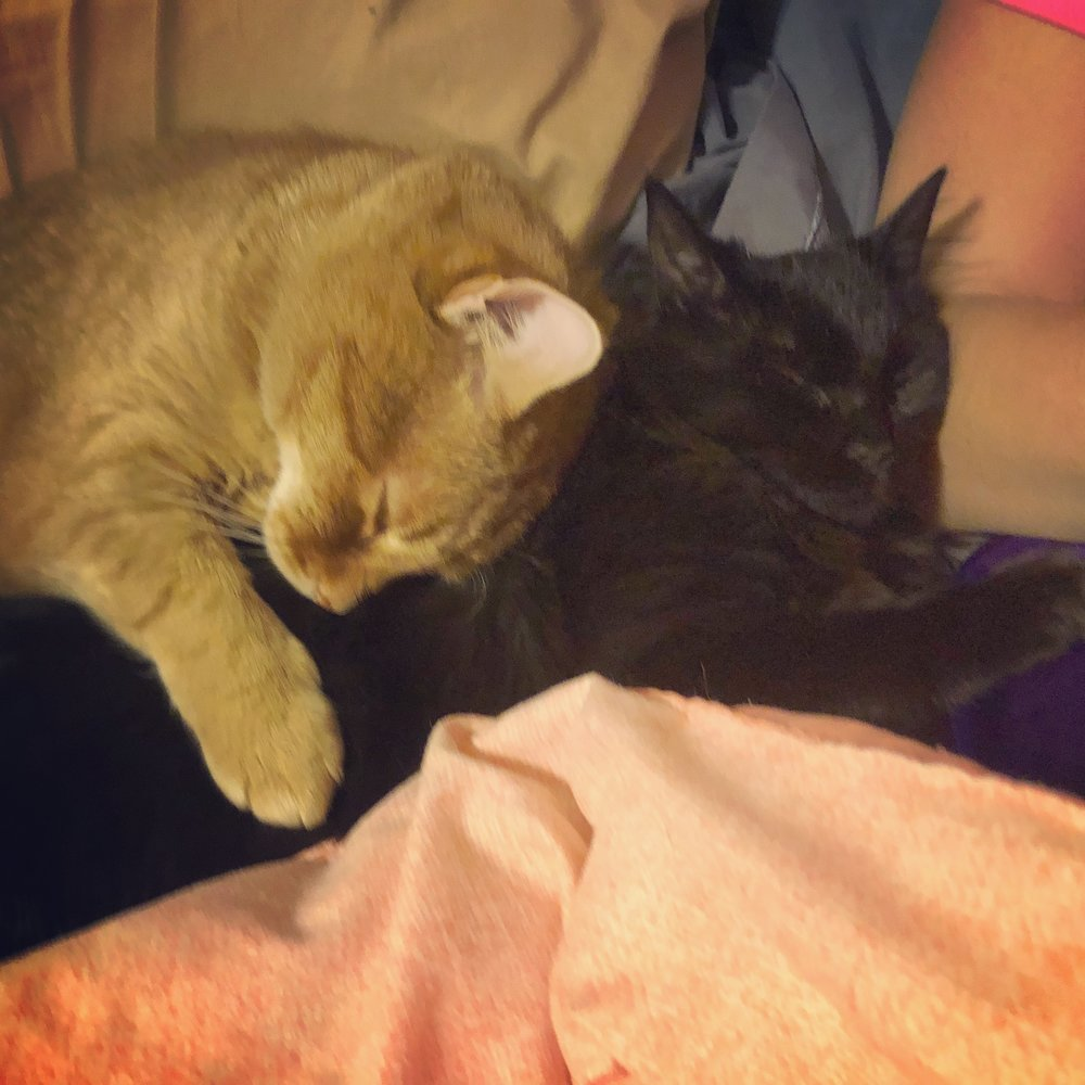 Huck and Shadow snuggling Photo credit: Alyssa DelSoldato
