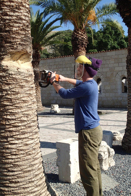BVC Tabgha 2013 Derek Rausch cuts down palm tree.JPG
