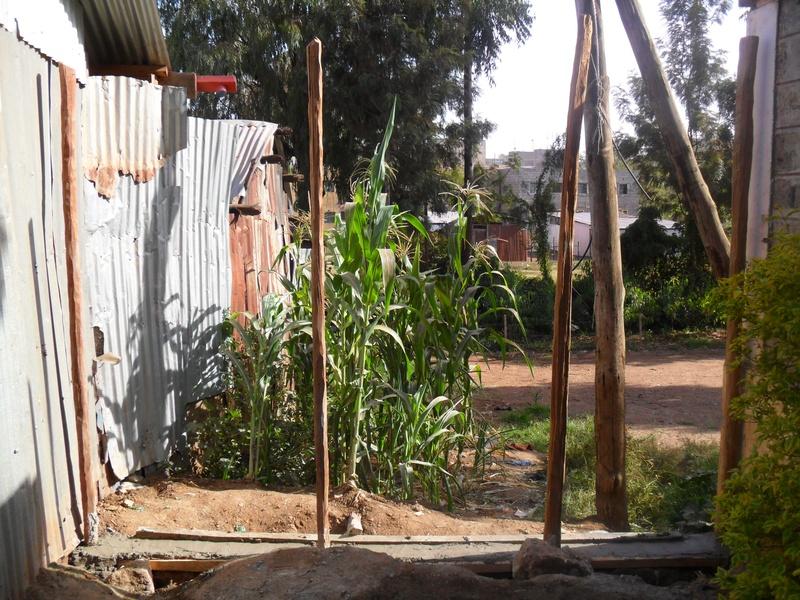 BVC Nairobi 2011 JD OConnell and Grant Stevens (49).jpg