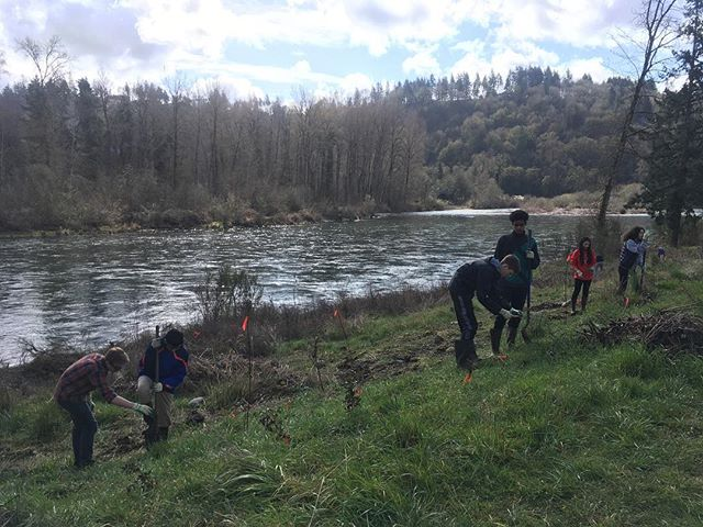 Enjoying a little sun and planting some elderberry along the Clackamas #clackamashighschool #clackamas #sahhahlee #portland #oregon #school