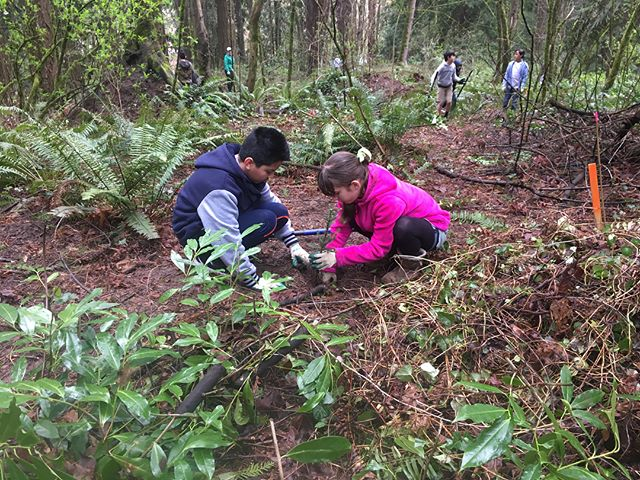 Planting day at Trillium Creek #robertgraymiddleschool #servicelearning #portland #oregon #nativeplants #school #getoutside