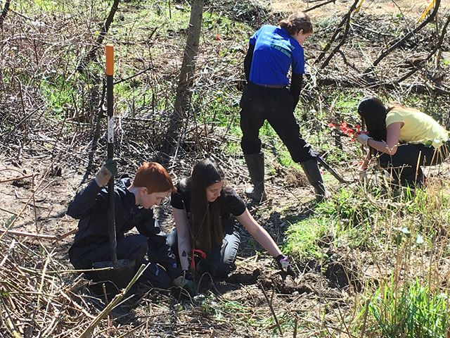 Planting, Reflecting and looking for bugs on this sunny day #rachelcarsonenvironmentalmiddleschool #native #plants #portland #oregon #sunny #school #servicelearning