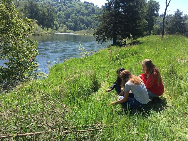 Monitoring our site for our last day at Sah Hah Lee. Thanks for a great year Clackamas High School #restoration #citizenscience #clackamas #nativeplants #sunshine #school