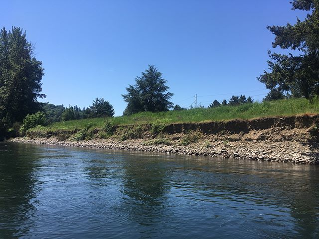 Checking out our Clackamas River sites from the river. We've still got work to do but they are coming along thanks to hardworking students #clackamasriver #floating #sahhahlee #digin #oregon