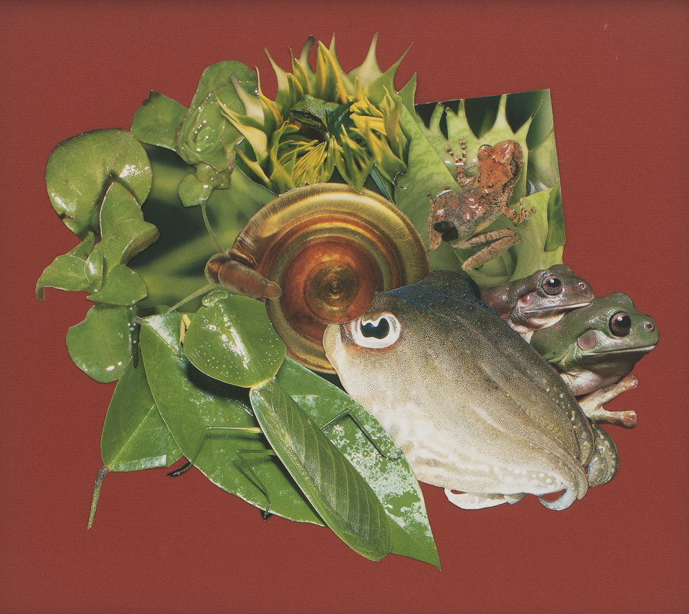 """Cuttlefish, Frogs, and Leaves"""