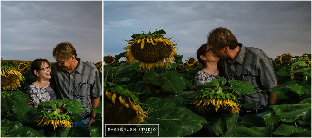 Sagebrush Studio. Sunflowers and Sunrise.