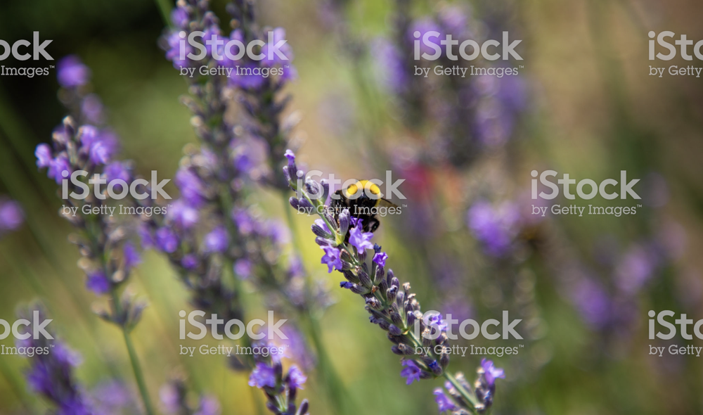 stockphotography-blog.png