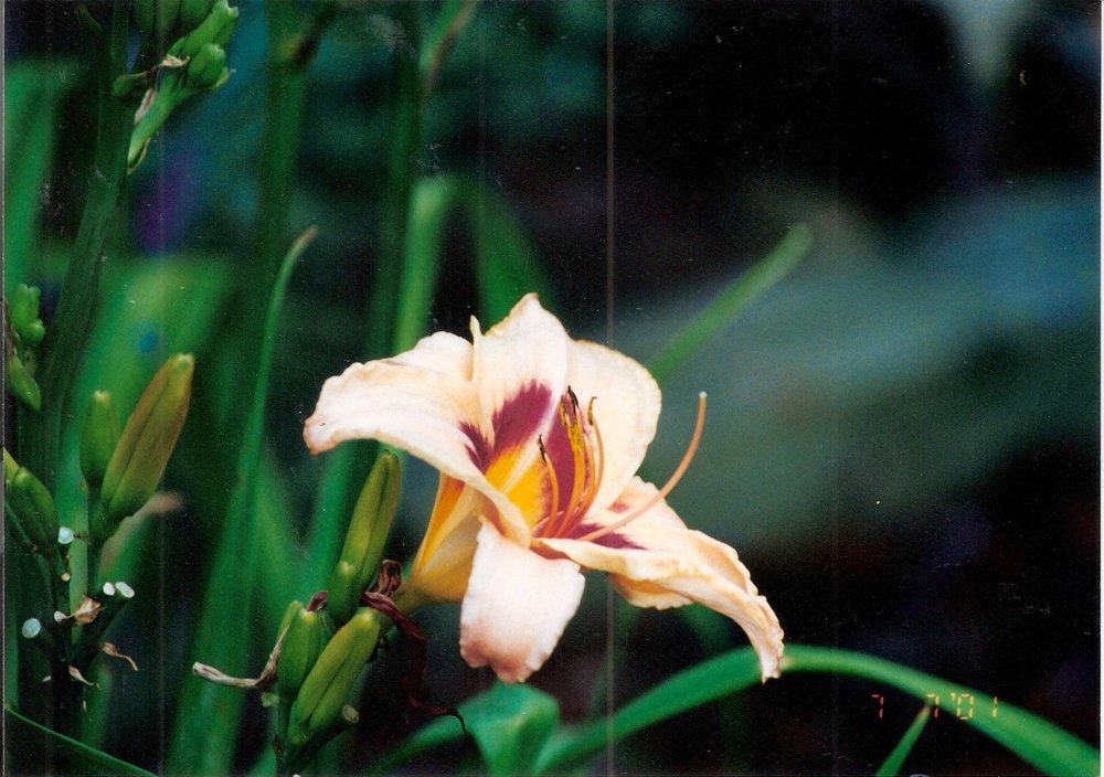 Flowers-02.jpeg