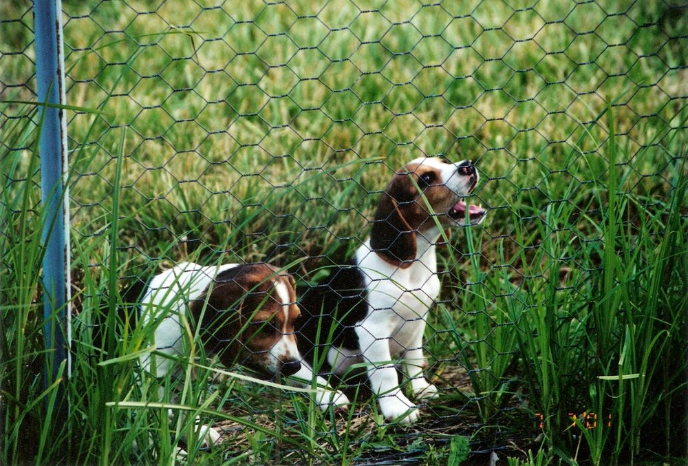 Puppies-01.jpeg