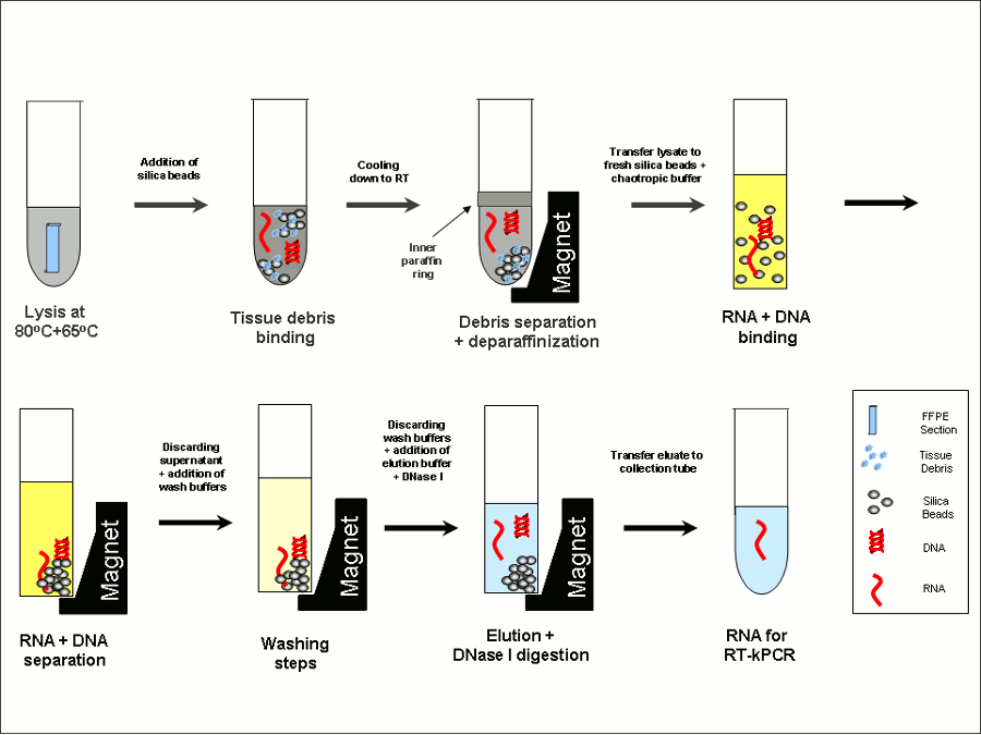 The FFPE Process