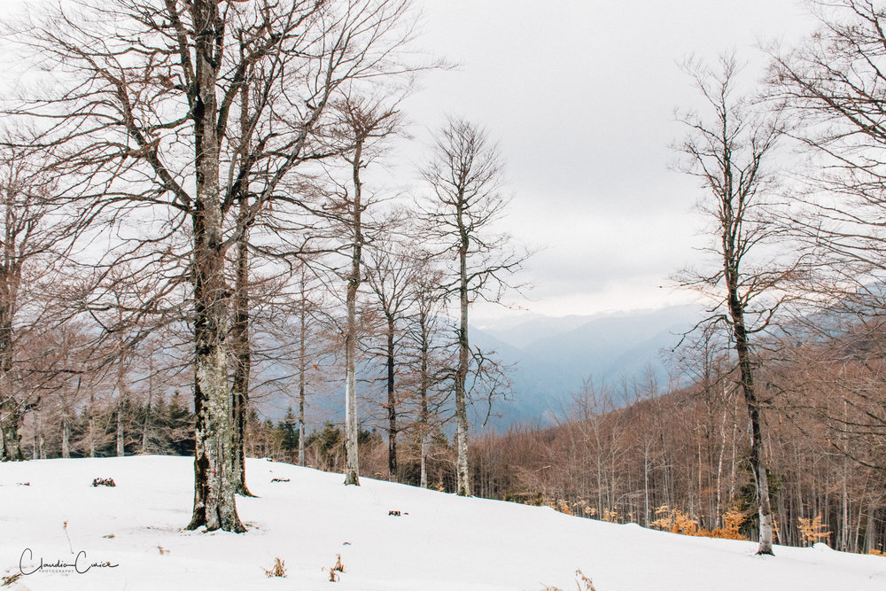 The last snow. Made with my first DSLR camera, Nikon D5300 @ 18mm, ISO 640, f/13, 1/125s
