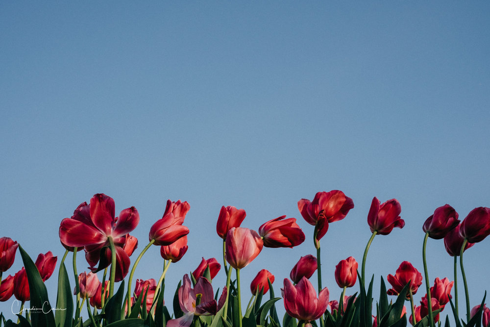 Happy Internation Women's Day! Happy Mothers' Day in Romania!