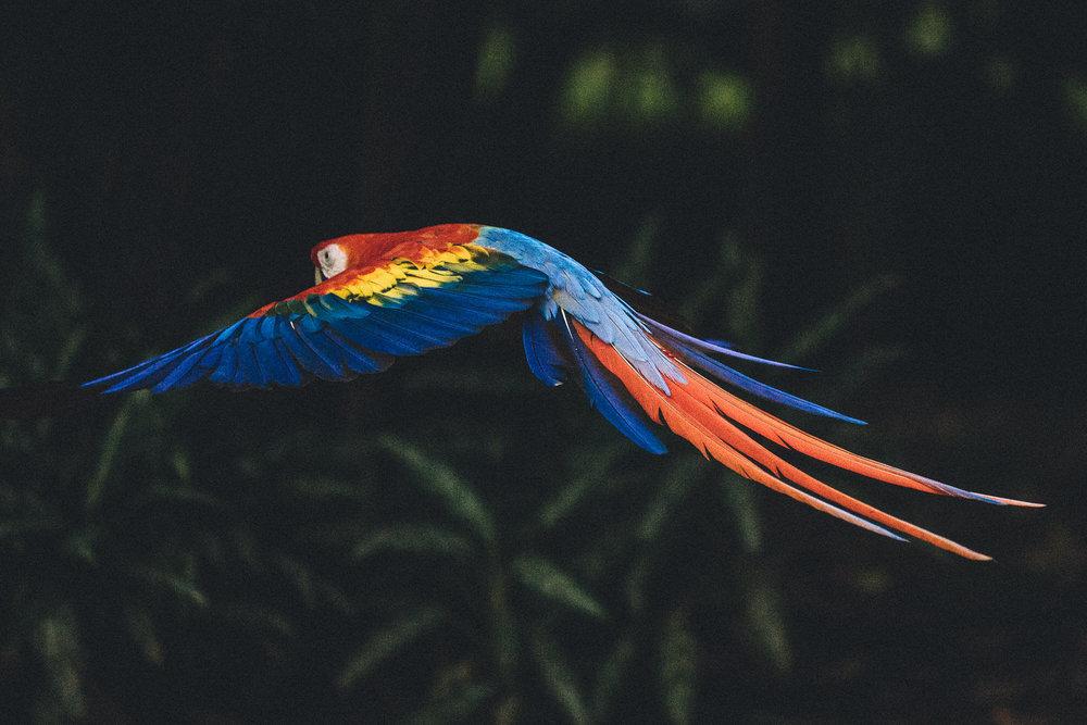 Costa-Rica-2017-658.jpg