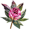 PeonyDivider.png