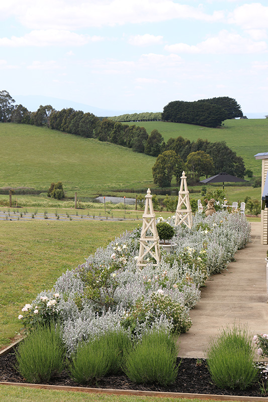 Rolling green hills provide a stunning backdrop to the white rose garden