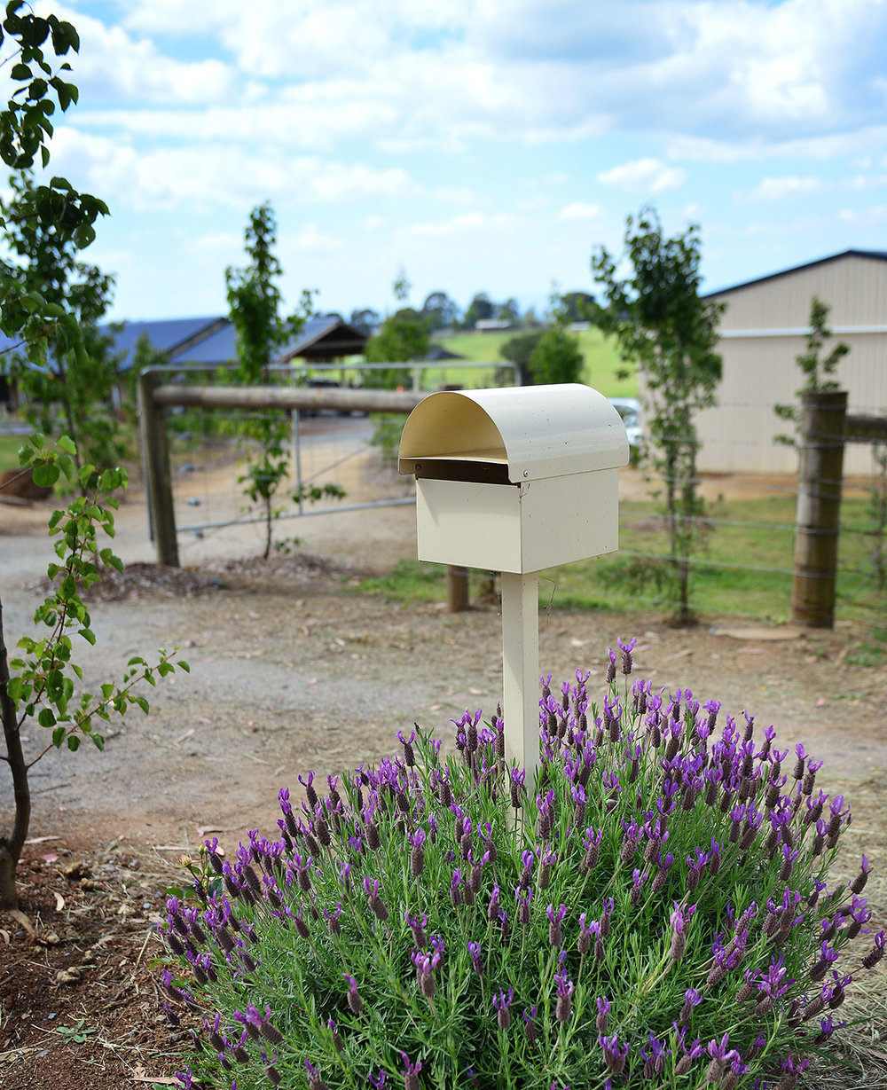 I couldn't resist dressing up the letterbox with lavender