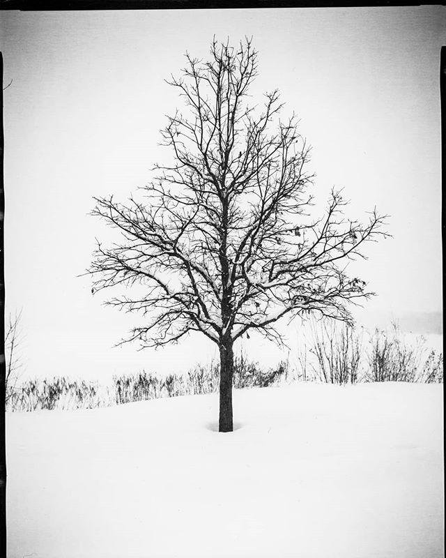 Symmetry.  8x10  Shot using the @intrepidcamera 8x10 mk1  #orthochromatic #largeformat #8x10 #photography #ilfordphoto #iso2 #winter #Minneapolis #minnesota #snowday #analogue #analog #analogfeatures #istillshootfilm #directpositive #homedarkroom