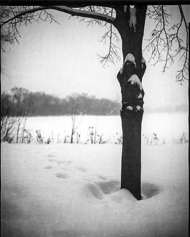 Footprints.  8x10  #orthochromatic #directpositive #harmandirectpositive #ilfordphoto #largeformat #footprints #snow #tree #Minneapolis #minnesnowta #blackandwhite #photography #largeformatphotography #intrepidcamera #analogfeatures #analogphotography #shootfilmunder1000