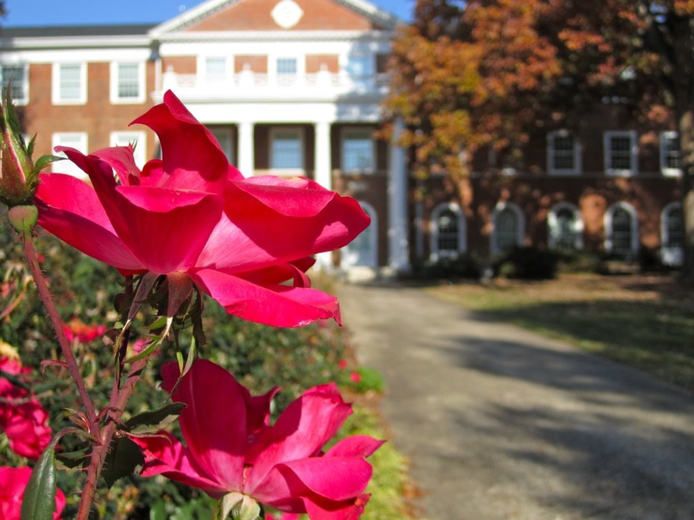 Alamance Rose - Elon University