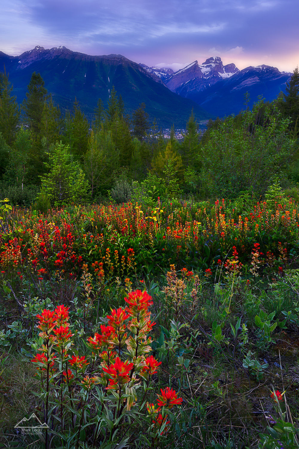 Fernie Wildflowers: This year was amazing for wildflowers around Fernie.  In the 2.5 years I've been here I haven't seen them bloom like they did this year.  I found this spot on a quick drive of the forestry roads around Fernie, and it took me 3 trips to this spot until I found the lighting that I liked