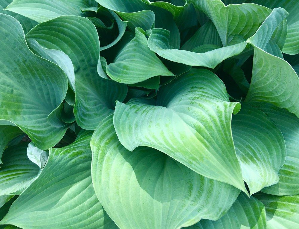 green-2384954.jpg