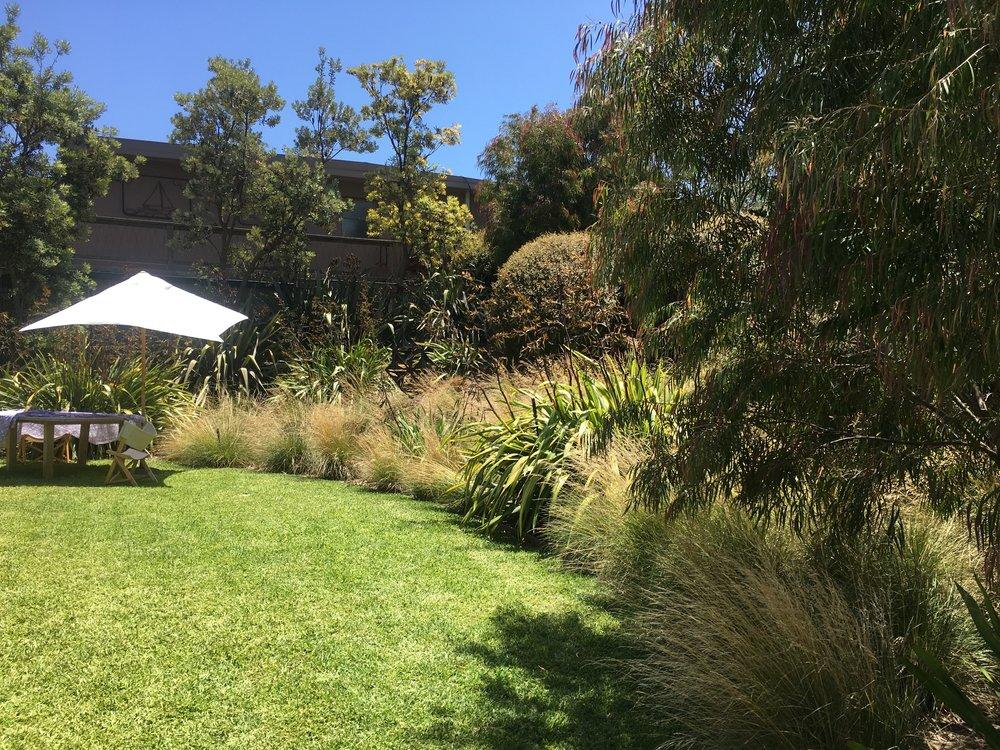 Arnott - lawn with banksia screen .jpg