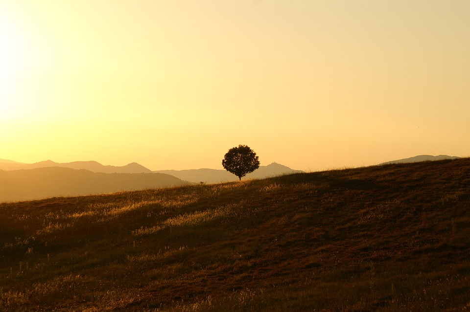 tree-189852_960_720