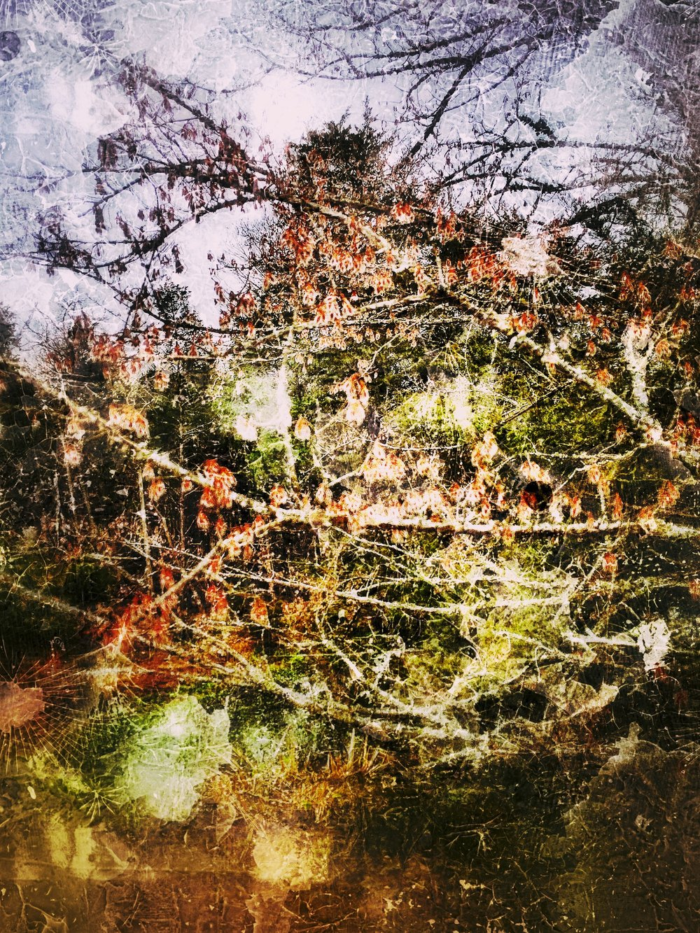 Ghost of Dogwood Dream.jpg
