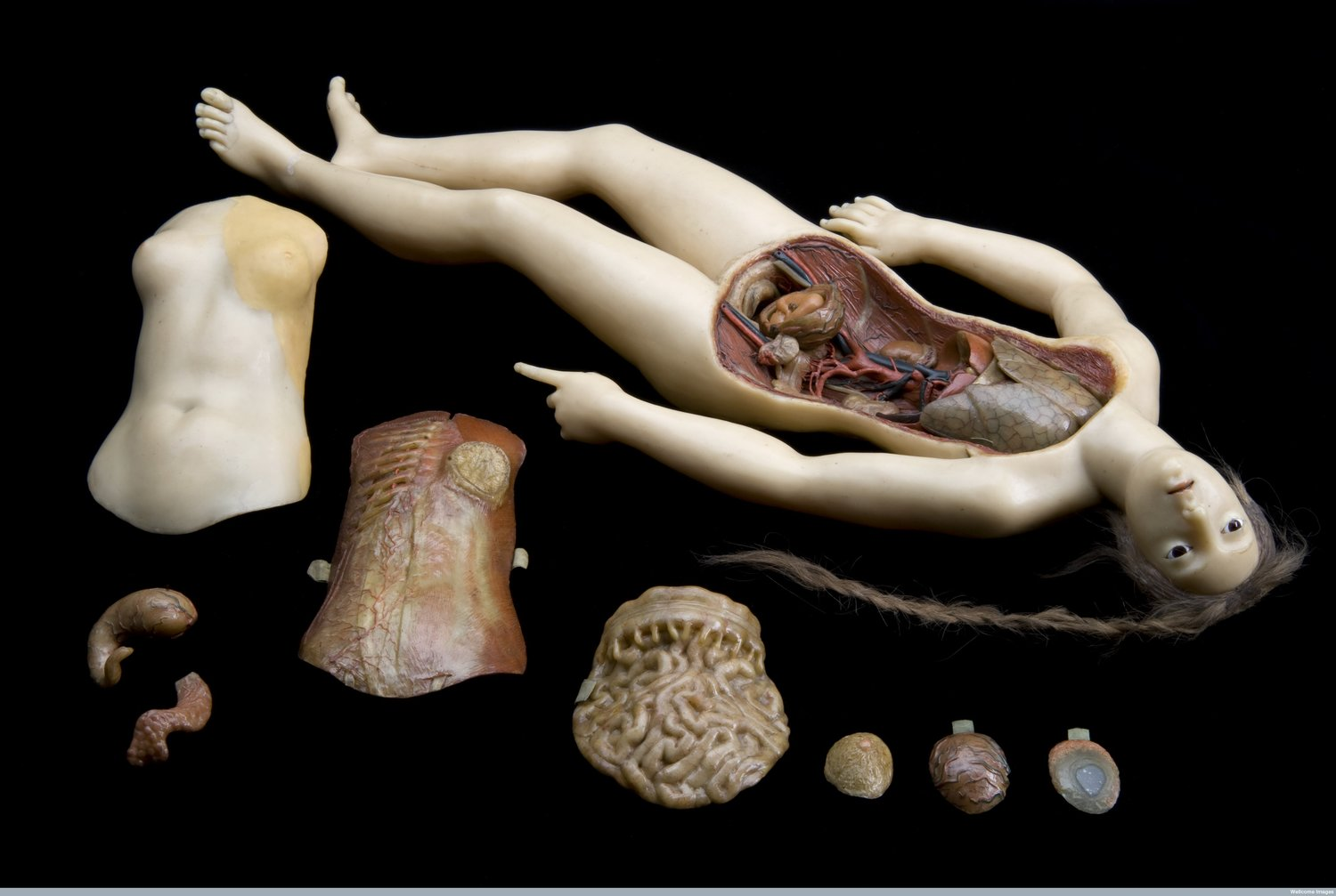 ANATOMISATION & DISSECTION — HARNESSING THE POWER OF THE CRIMINAL CORPSE