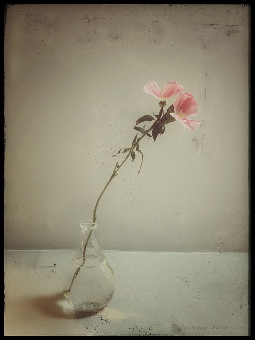 "from the series ""Flowers"