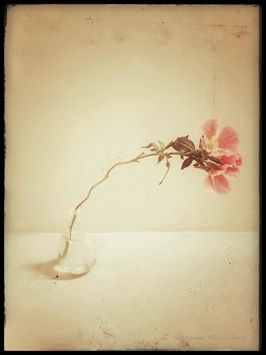 "Copy of from the series ""Flowers"""