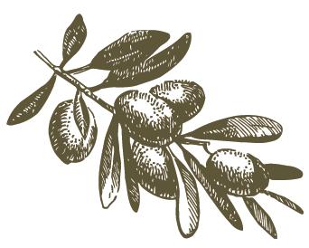 olive crop.png