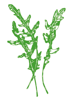 rugola crop.png