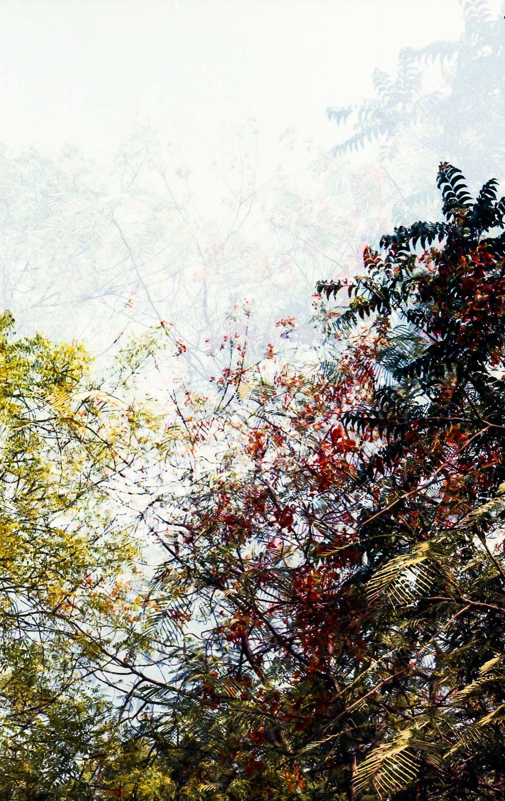 Summer in Double Exposures_3.jpg