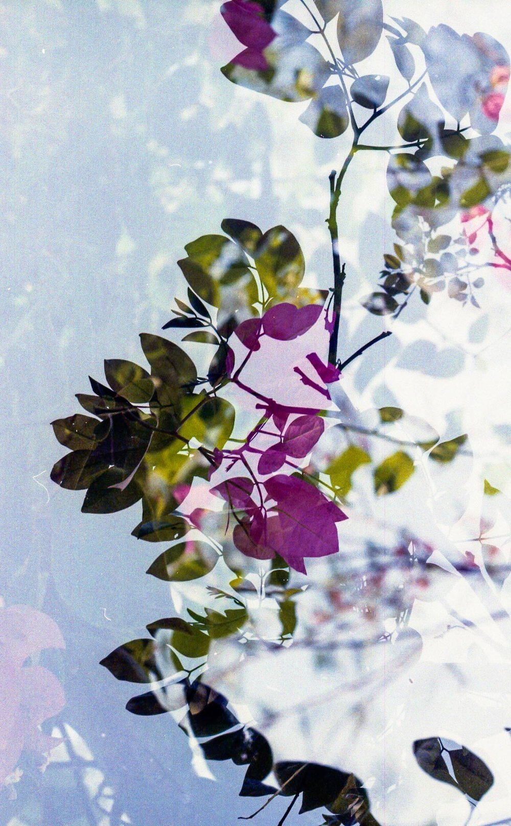 Summer in Double Exposures_4.jpg