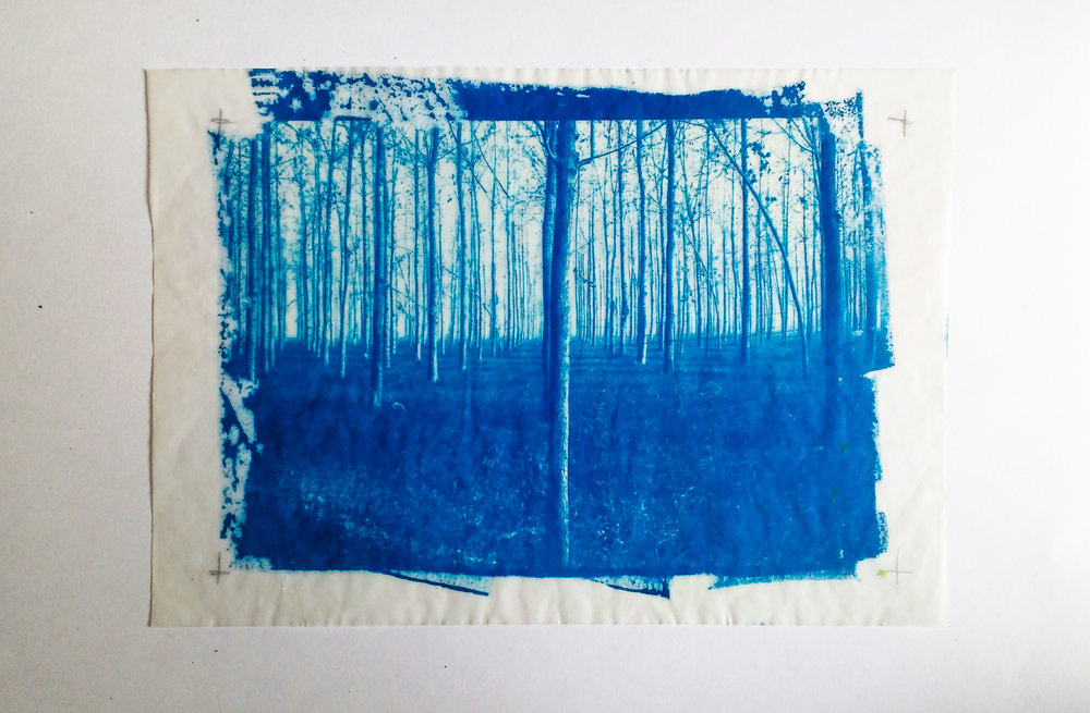 Cyanotype on butter paper