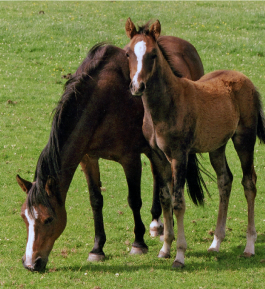 mare and foal 1.png