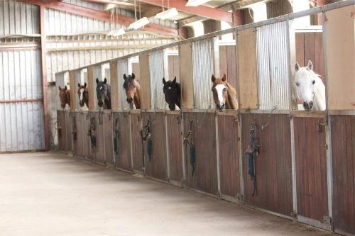 stallions in stables.jpg