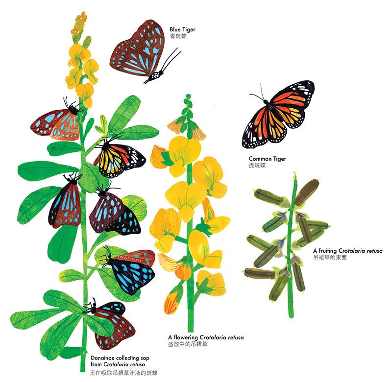 butterfly draft10