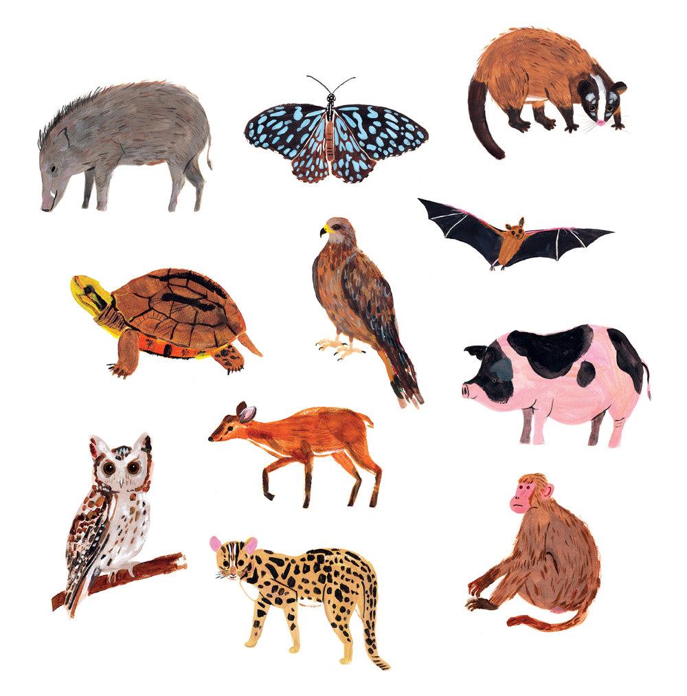 animals11-01.jpg