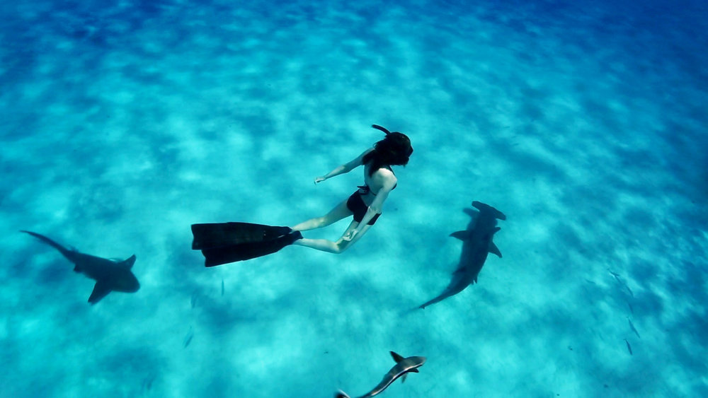 Julia and sharks